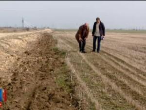 Programul ce ar fi trebuit sa ajute fermierii le pune de fapt piedici. Ce trebuie sa faci pentru bani prin Prima Impadurire