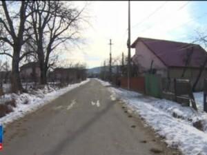 Disputa pe gaini ucise de caini si oi mancate de lupi, in Prahova. A fost o haita care a facut prapad