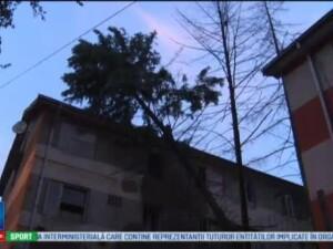 Brad doborat de furtuna peste un bloc din Drobeta Turnu Severin. Interventia dificila desfasurata de pompieri