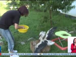 Un adapost de langa Sibiu, casa pentru zeci de berze. Voluntarii au nevoie de ajutor pentru a salva cat mai multe animale