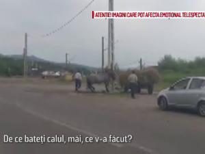 Cal batut in Bacau