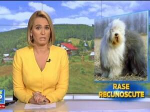 Ciobanescul mioritic si cel carpatin, cele doua rase canine cautate in Europa si recunoscute acum si la nivel international