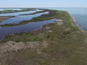 insule Delta