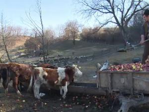 mere animale