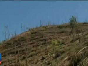 Pericol in padurile Romaniei! Legea prin care Guvernul nu mai vrea sa pazeasca codrii retrocedati, trimisa in Parlament