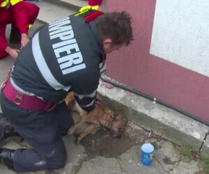 Catel salvat de pompier