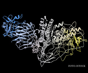 molecula de botox