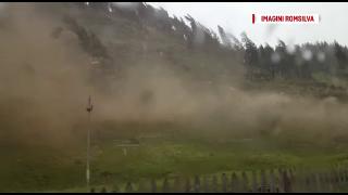 furtuna, paduri