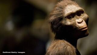 maimuta, stramosul omului