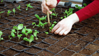 agricultura, studenti, tineri