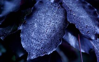 plante negre