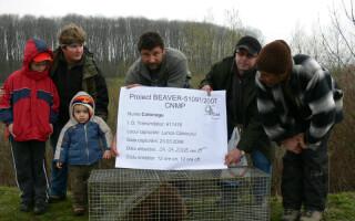 castor eliberat in Romania