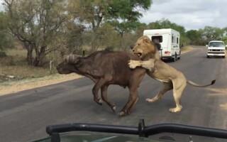 atac leu