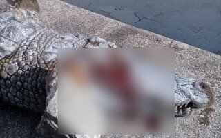 crocodil ucis ZOO Tunis