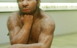 omul de neanderthal