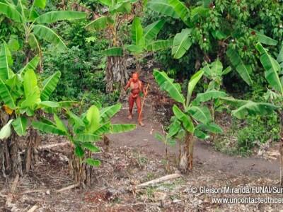 Trib Amazon