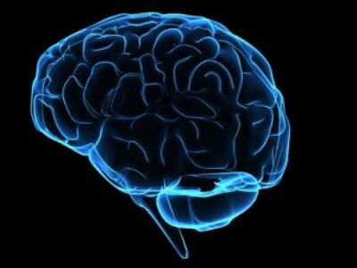 creier