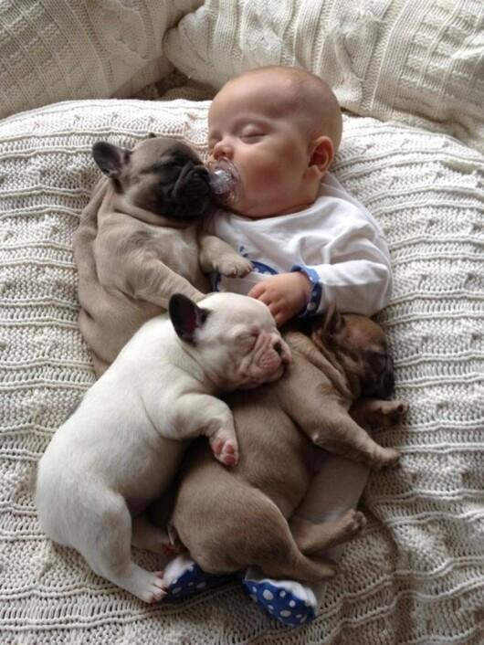 Poza Zilei Bebelusul Care Doarme Alaturi De 3 Bulldogi Francezi