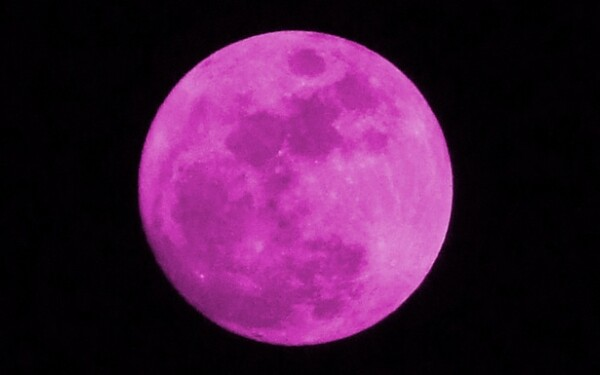 luna roz