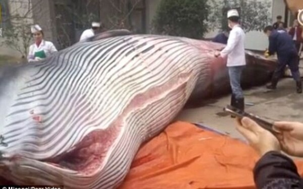 balena china