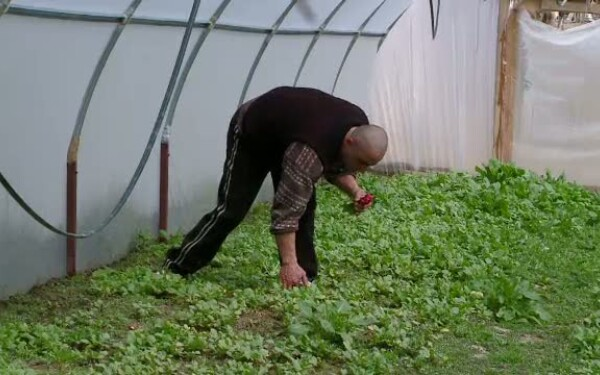 sere legume