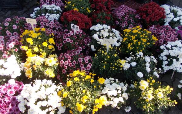 8 martie, ziua femeii, flori