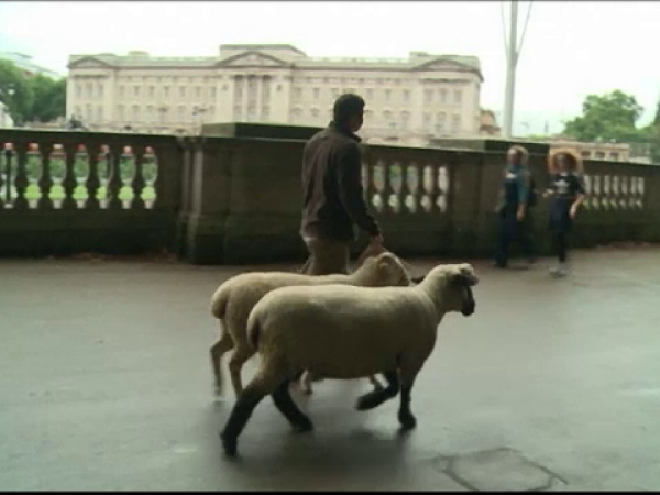 oi Palatului Buckingham