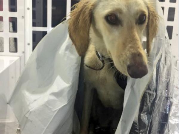 Câine salvat