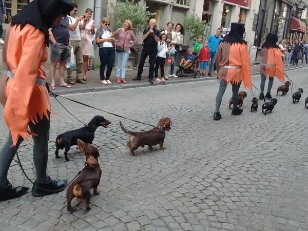 caini la parada din Bruges