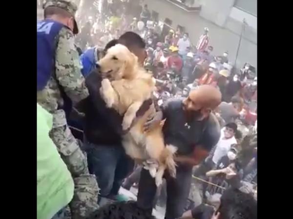 câine salvat Mexic