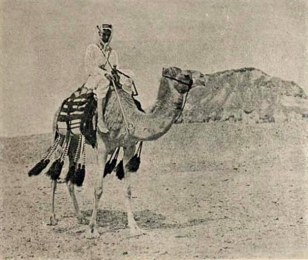 beduin geabeli pozat de un roman
