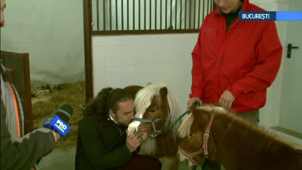 Mihnea Vargolici, cai, ponei