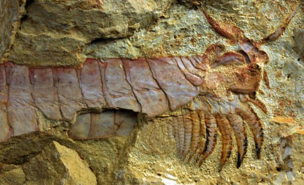 fosila marina