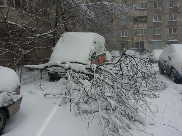 copac cazut peste masina, sectorul 5