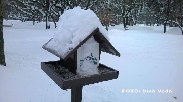 pasari afectate de gerul din Romania