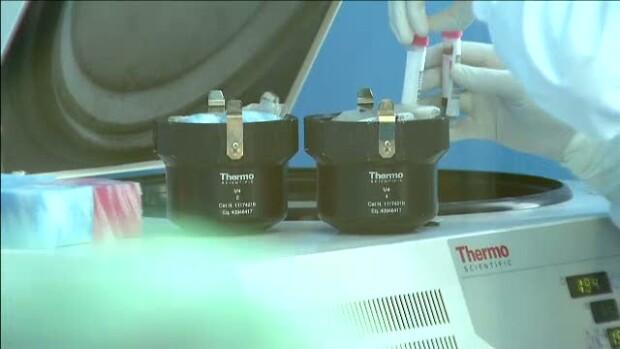 testare celule stem