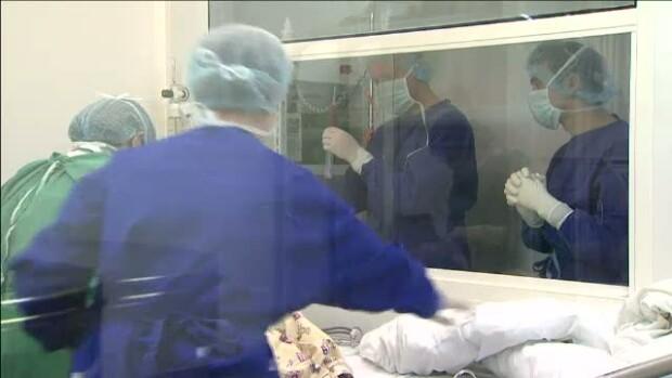 medici, celule stem