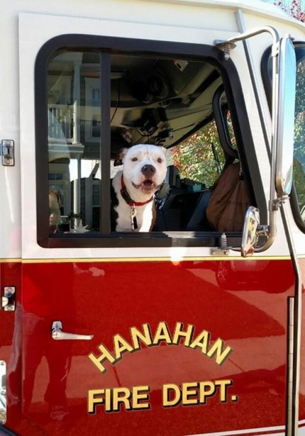 caine pompier