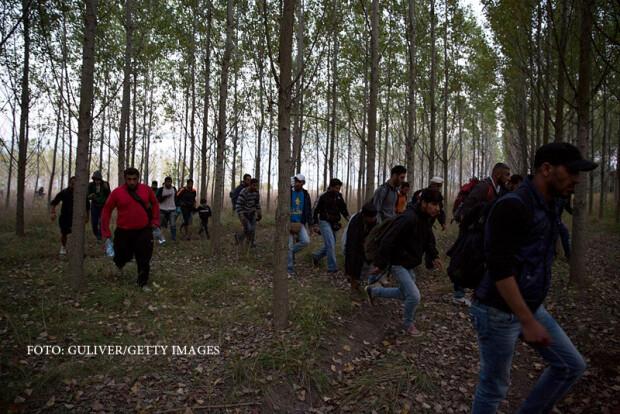migranti intrand in Ungaria prin padure