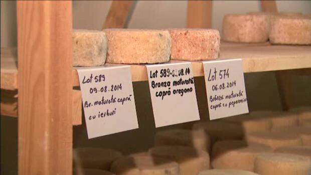 fabrica de iaurturi sanatoase Tecuci