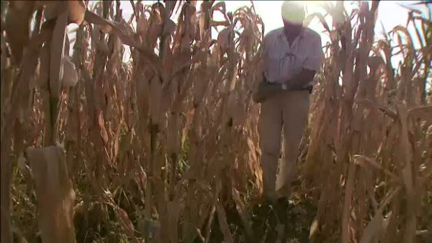 RTI - Agricultura