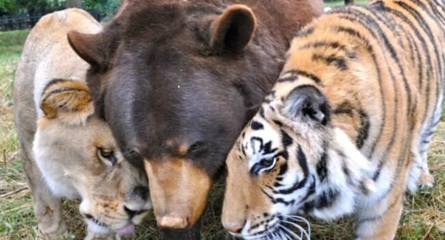 Trei prieteni neobisnuiti. Povestea superba, dar trista, din spatele acestei fotografii