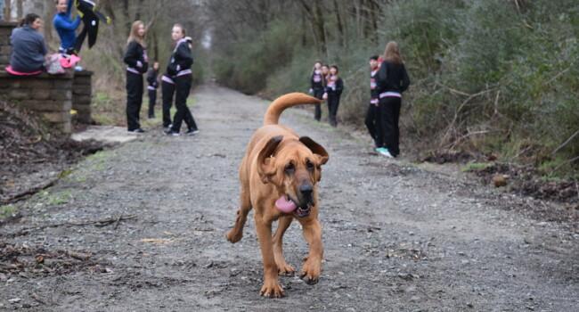 Un caine s-a alaturat unui maraton de 21km si a terminat cursa! Pe ce loc a putut sa iasa