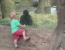 pui gorila