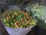 flori rusia