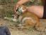 pisica salvata