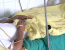 pacient cu hepatita C