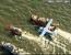 avion apa