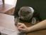 pisica director