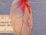 inima spanac